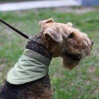 Охлаждающие средства для собак и их хозяев